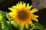 ... meine Lieblingsblumen...