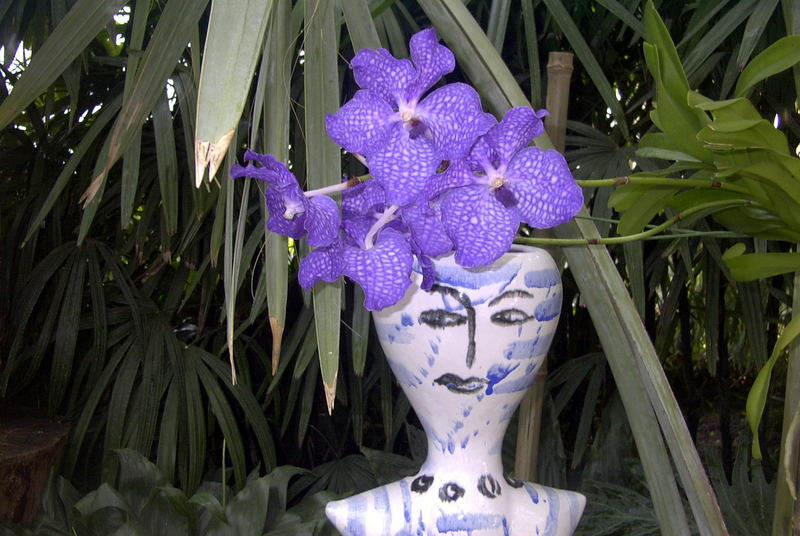 Meine Lieblingspflanze