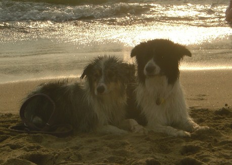 Meine Mädels am Meer in der Abenddämmerung