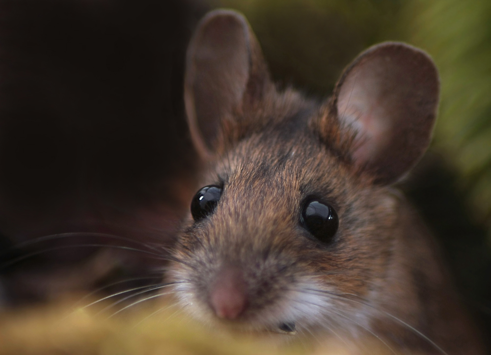 Meine Maus ...