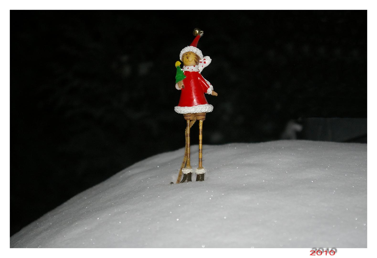 Meine Mieze im Schnee - mal ohne Skihas'l