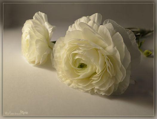 Meine Mittwochsblümchen..