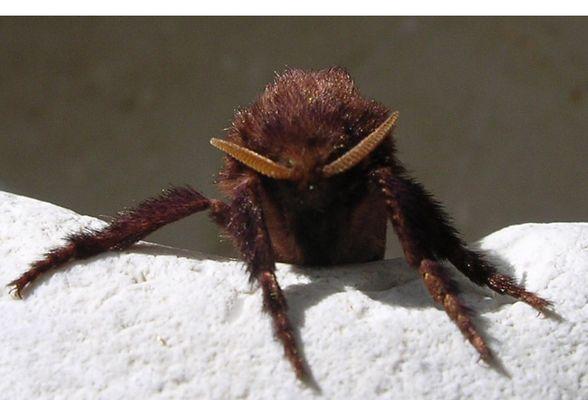 meine Motte