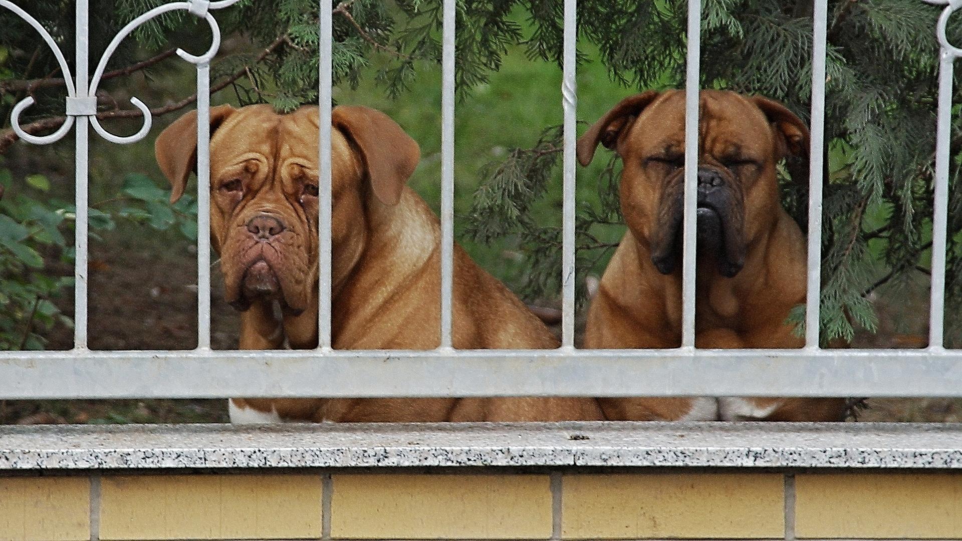 Meine Nachbarn!!