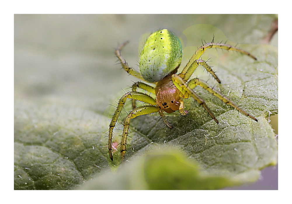 Meine neue kleine grüne Balkonmitbewohnerin