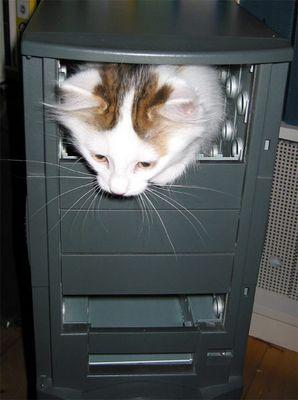 meine neue PC-Katze