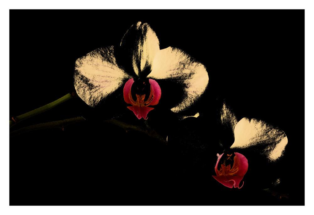 Meine Orchidee!!!