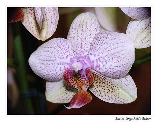 Meine Orchidee im Sucher