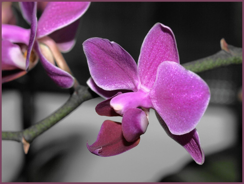 Meine orchideen blühen heuer sehr brav und lange!