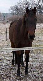 Meine Pferd