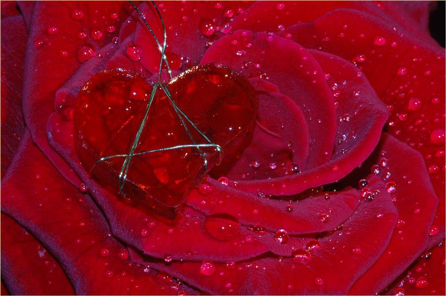 meine Rose...