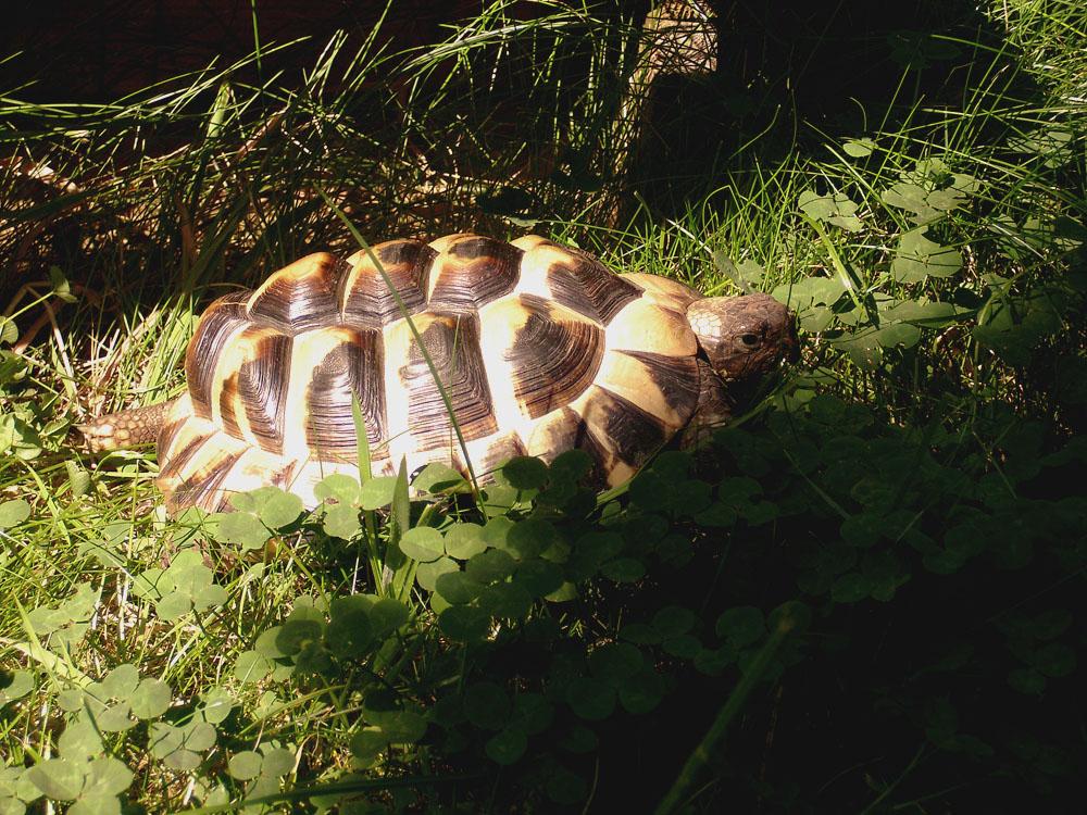 Meine Schildkröte