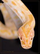 Meine Schlange