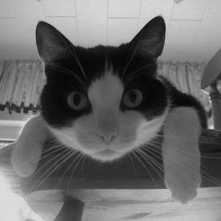 Meine Schmusekatze