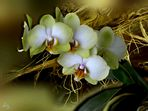 Meine Sonntag Orchidee..
