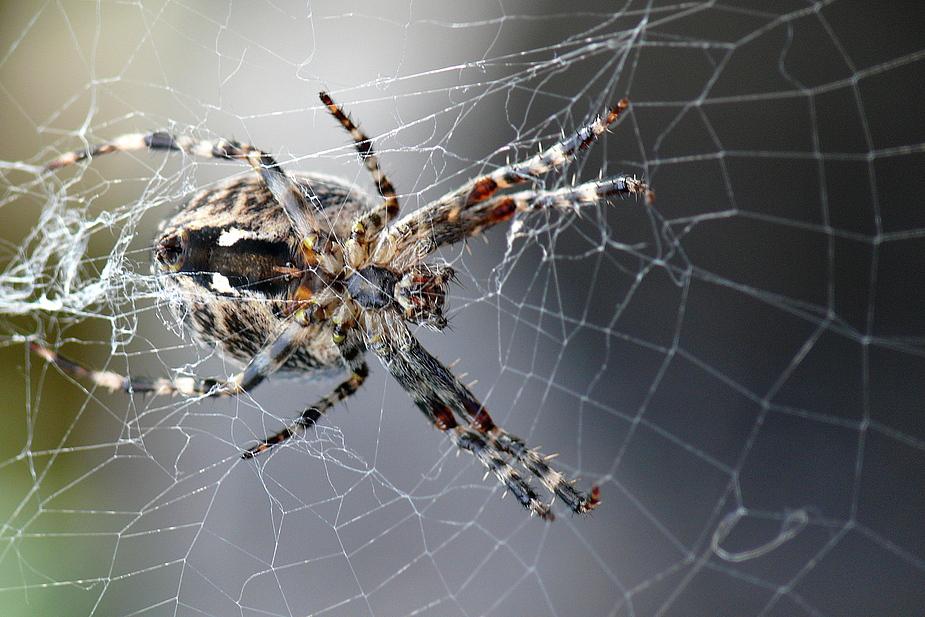 Meine Spinne, spinnt,