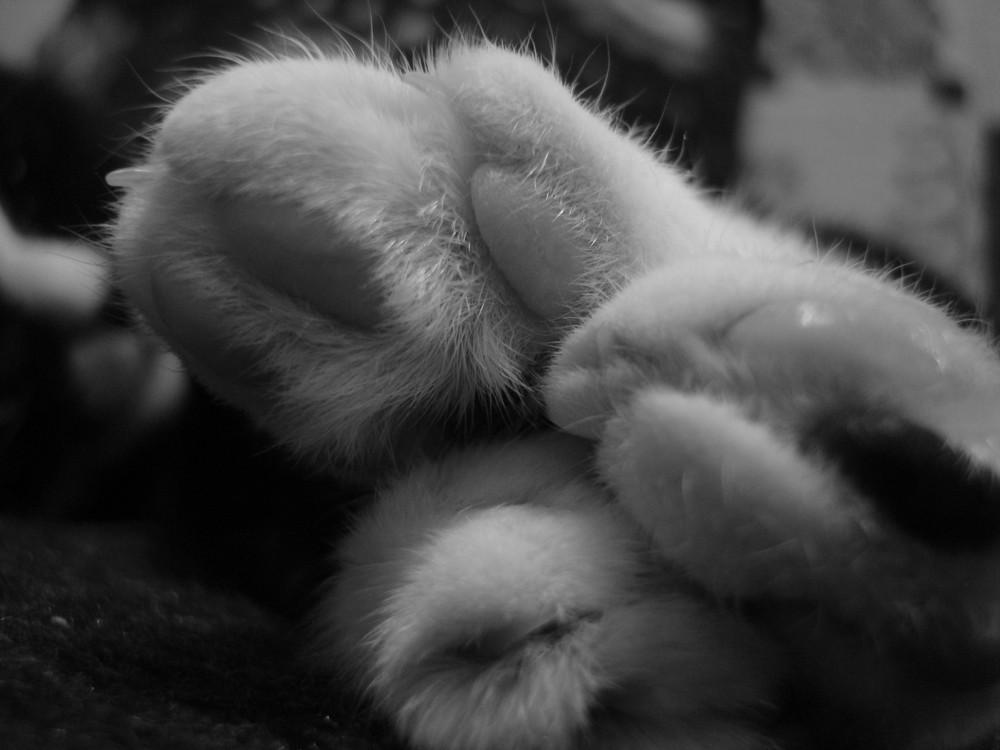 Meine süße Maus :-)