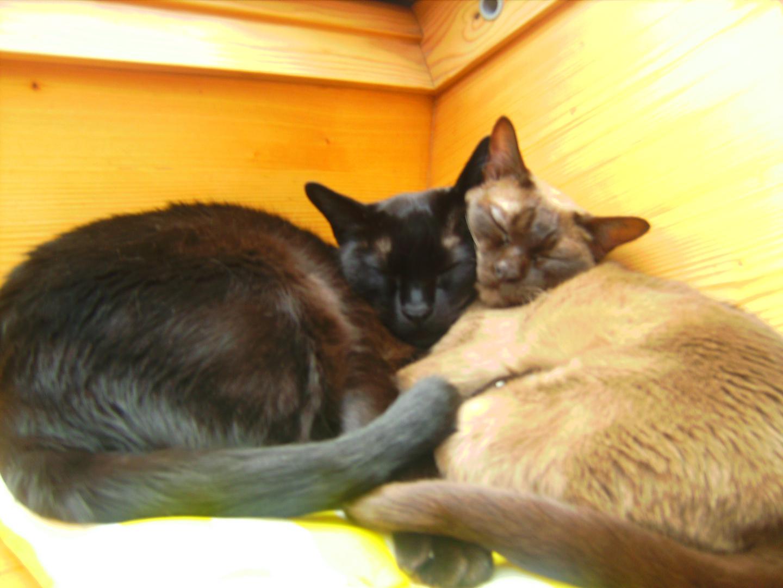 meine verliebten Katzen