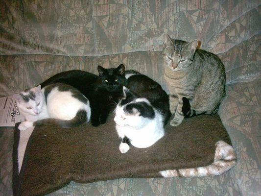 Meine vier Katzen!