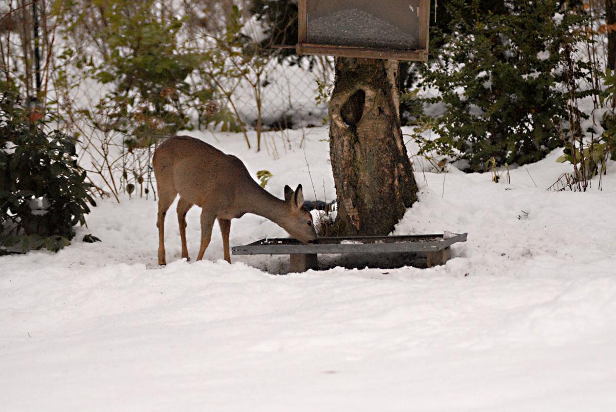 Meine Wintergäste 19: Ein Überraschungsgast