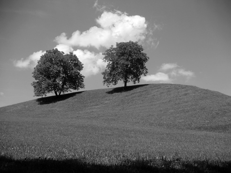 Meine zwei Bäume