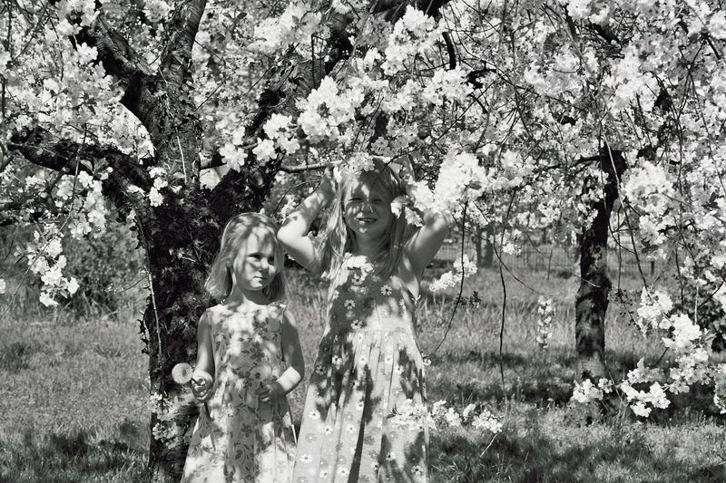 Meine zwei lieben die Kirchblüte