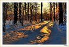 """"""" Meinem Wald im Winter """""""