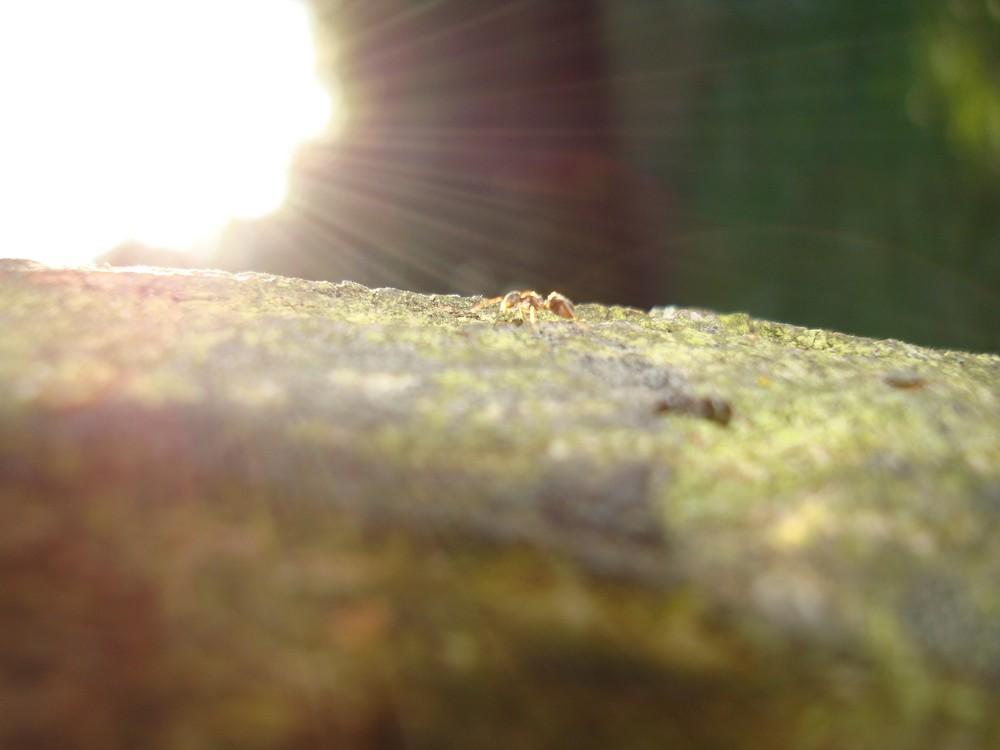 Meisi der Sonne entgegen