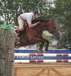 Meisterschaft im Pferdesport