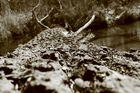 Melancholie eines Baumes