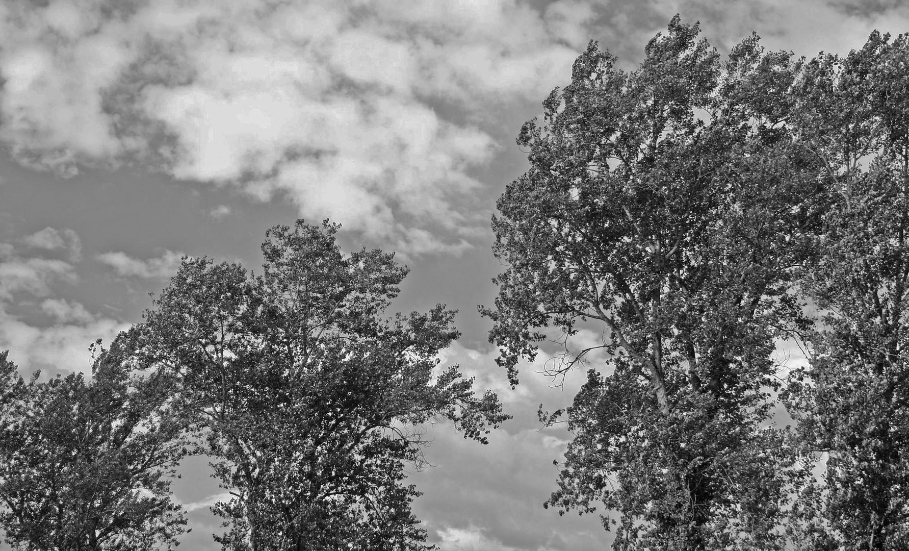Melancholische Bäume im Wind vor Wolken