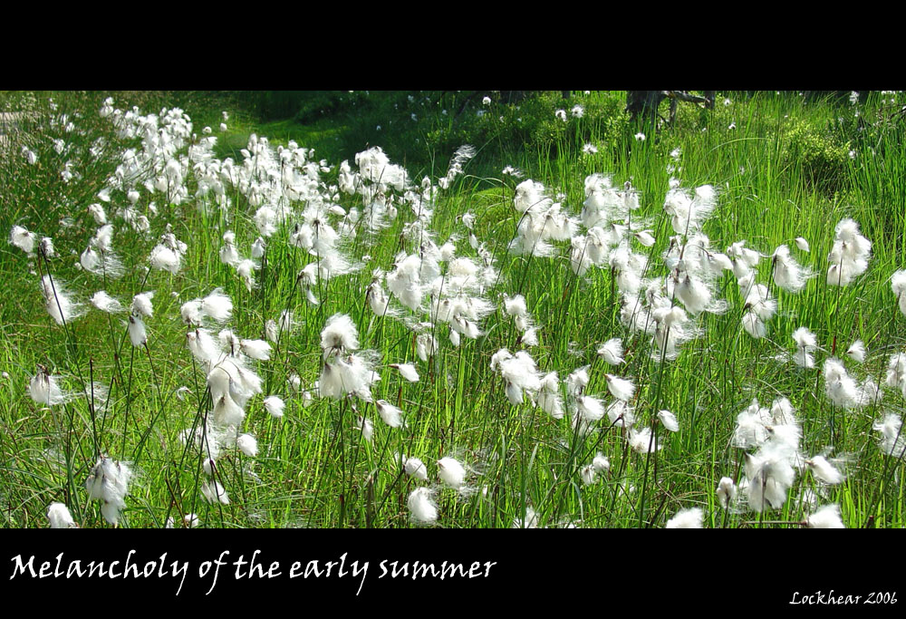 Melancholy of the early summer