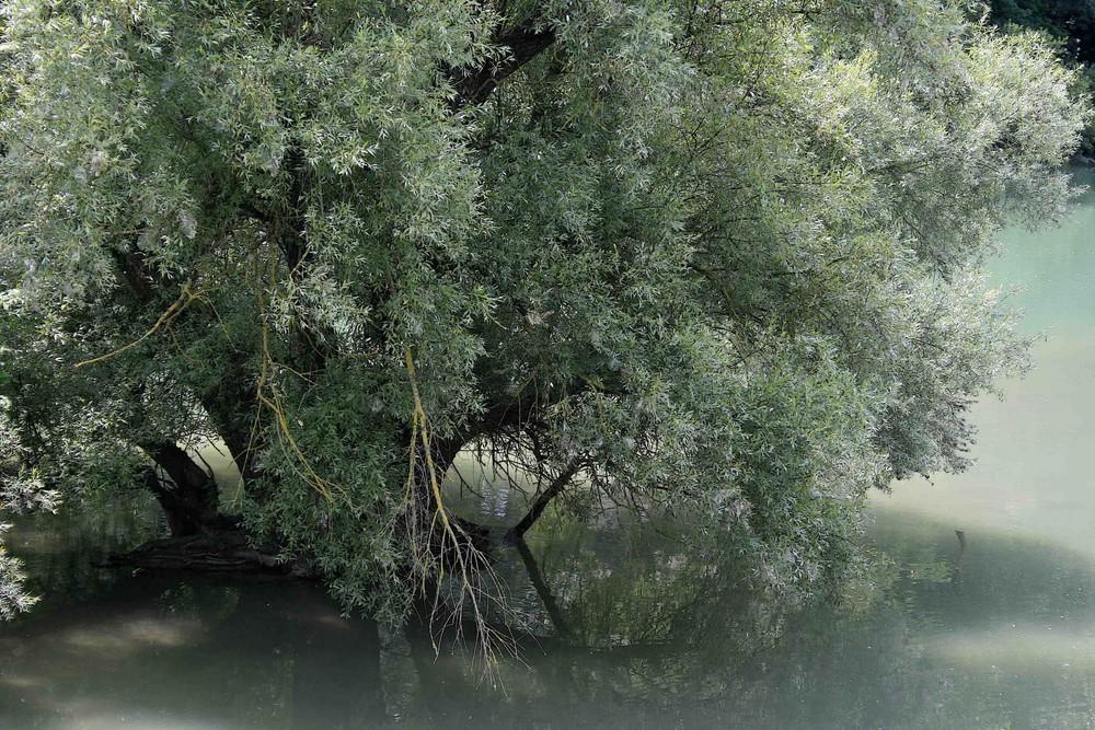 Melange aus Grün [1]