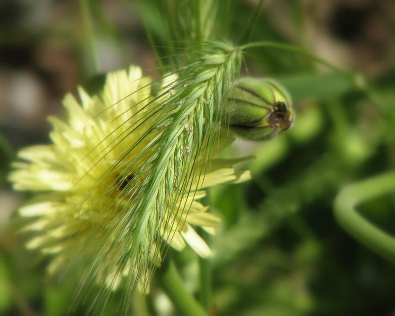 Meli-melo d'herbes