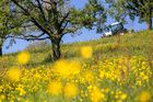 Mellow Yellow Meadow