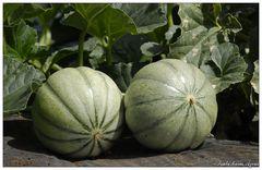 Meloas (Santa Maria, Azoren)