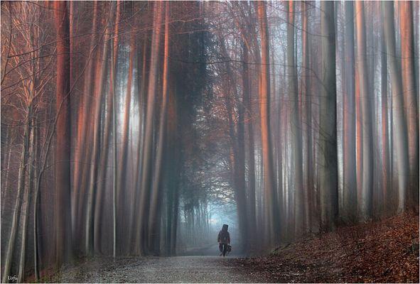 Melodien im Wald (736)