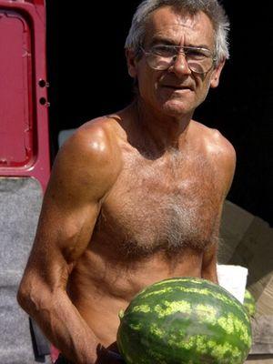Melonen - frisch geerntet!
