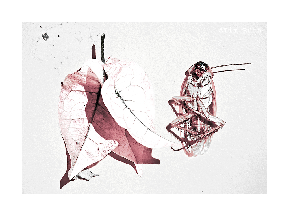 - memento mori (VIII) -