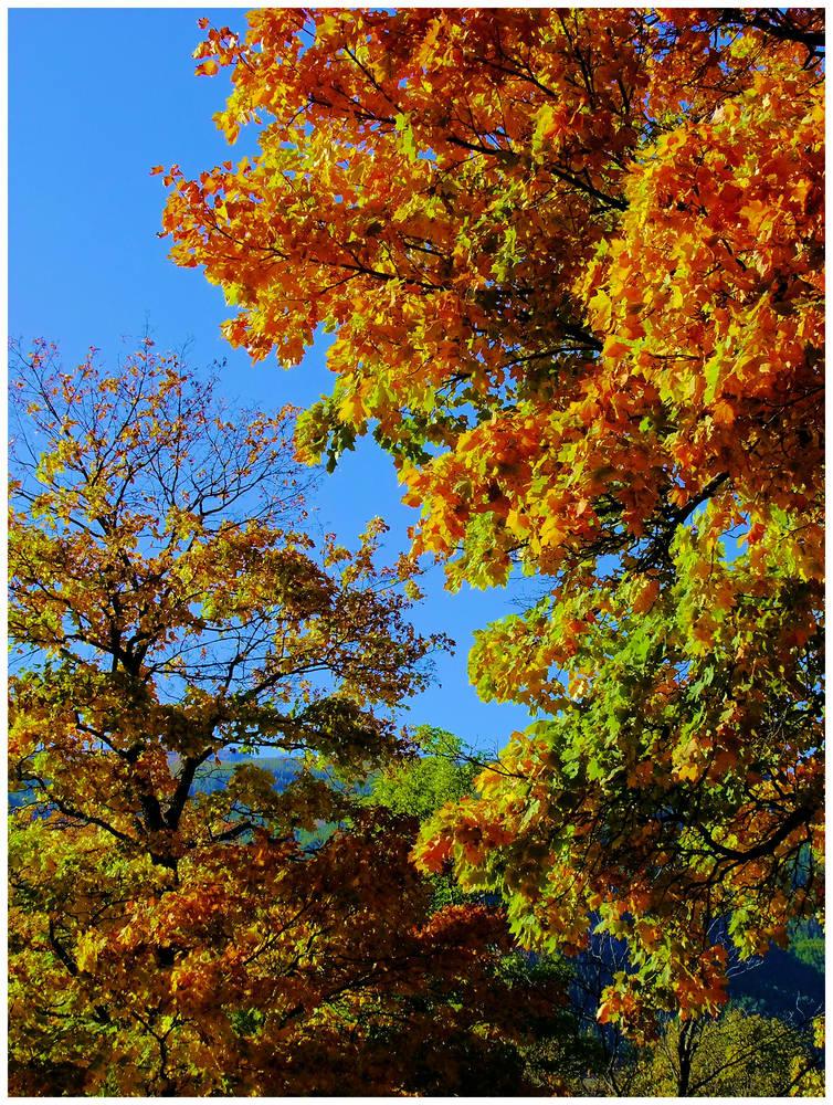 Mémoire d'automne...