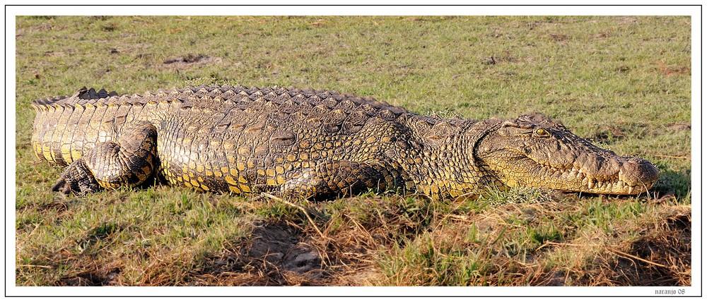MEMORIAS DE AFRICA - A orillas del rio Ocavango