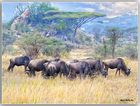MEMORIAS DE AFRICA-ACACIAS Y ÑUS -PN DEL SERENGUETI-TANZANNIA