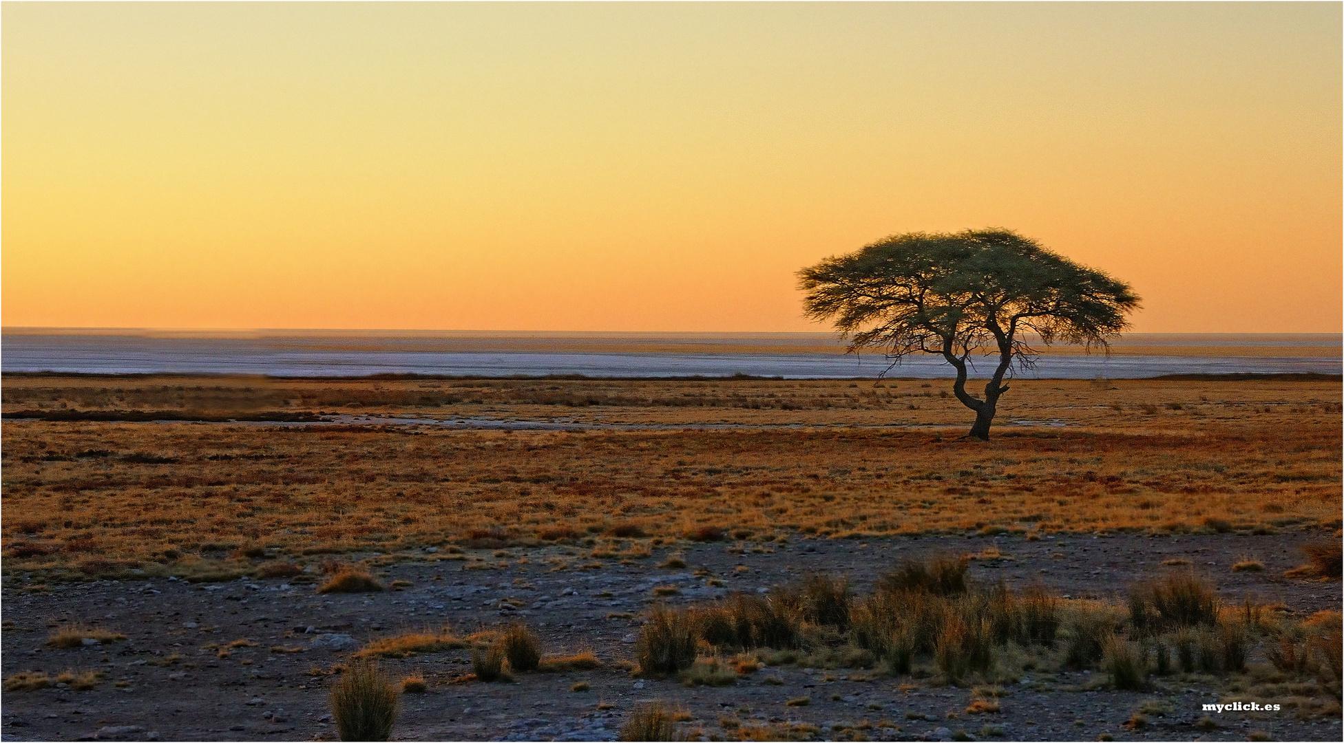 MEMORIAS DE AFRICA -ATARDECER CON ACACIA-PN ETHOSA-MAMIBIA