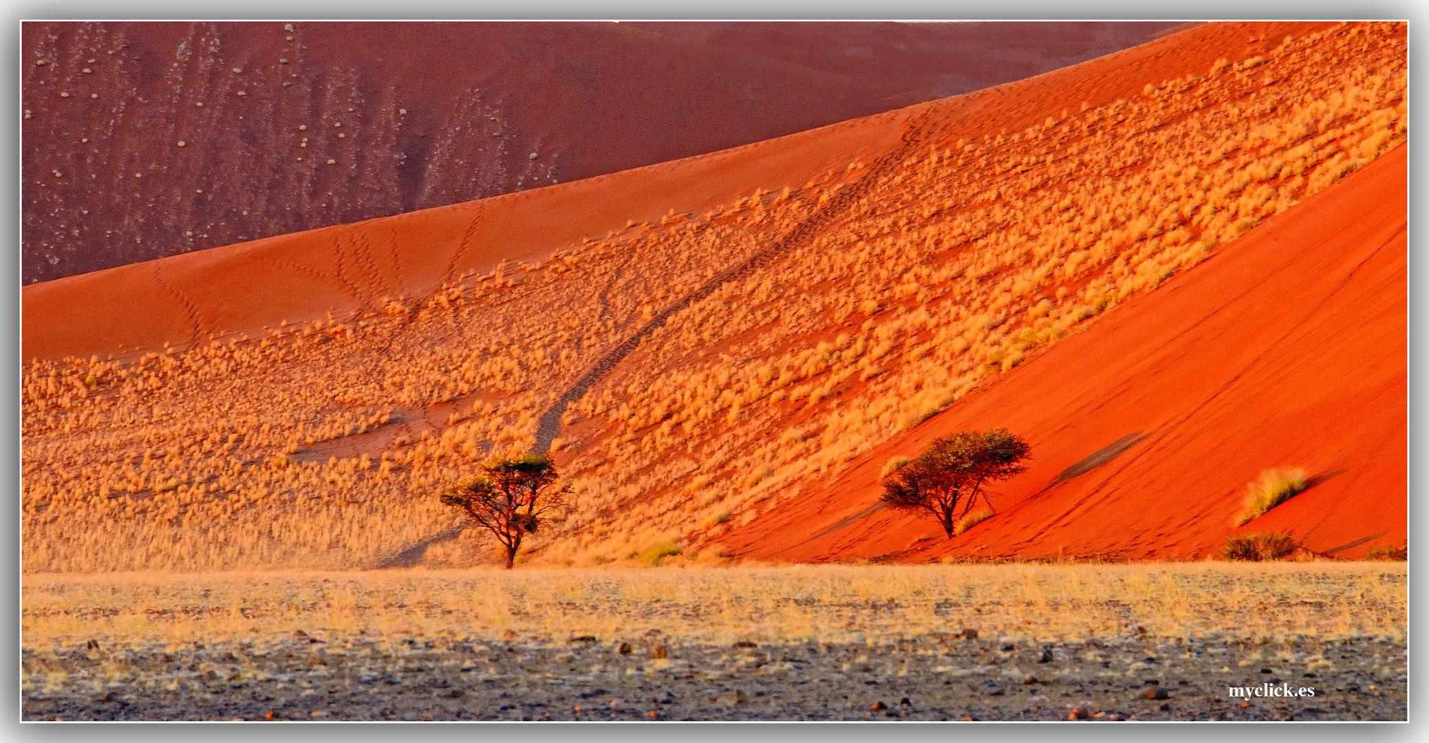 MEMORIAS DE AFRICA -CONTRASTES  DE SUSSVLEI-NAMIBIA
