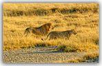 MEMORIAS DE AFRICA-DE CAZA-2 ETHOSA -NAMIBIA