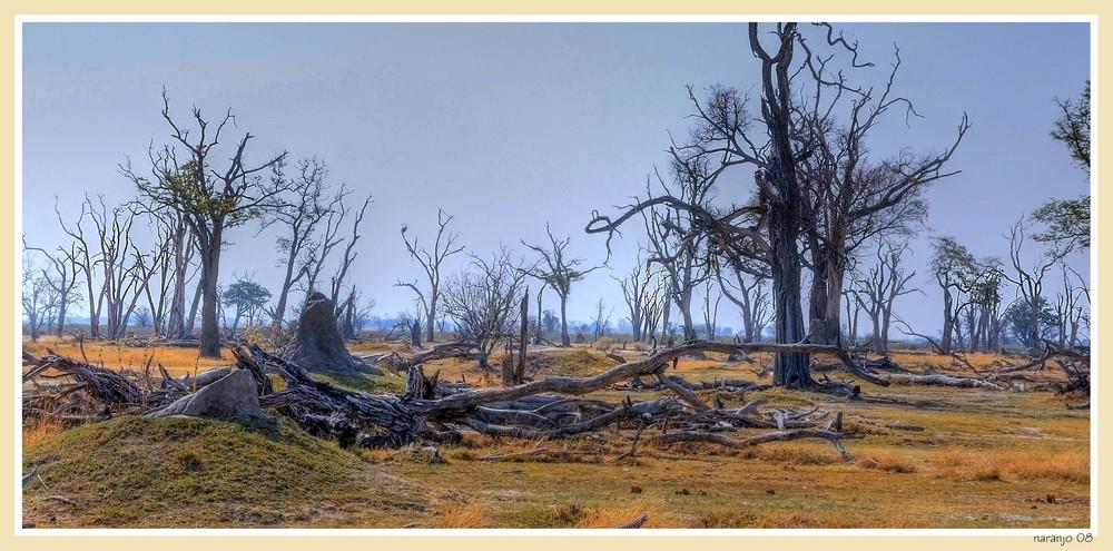 MEMORIAS DE AFRICA - EL BOSQUE PETRIFICADO-II