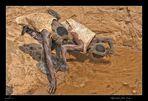 MEMORIAS DE AFRICA -HADZABES TOMANDO AGUA-EYASY -TANZANIA