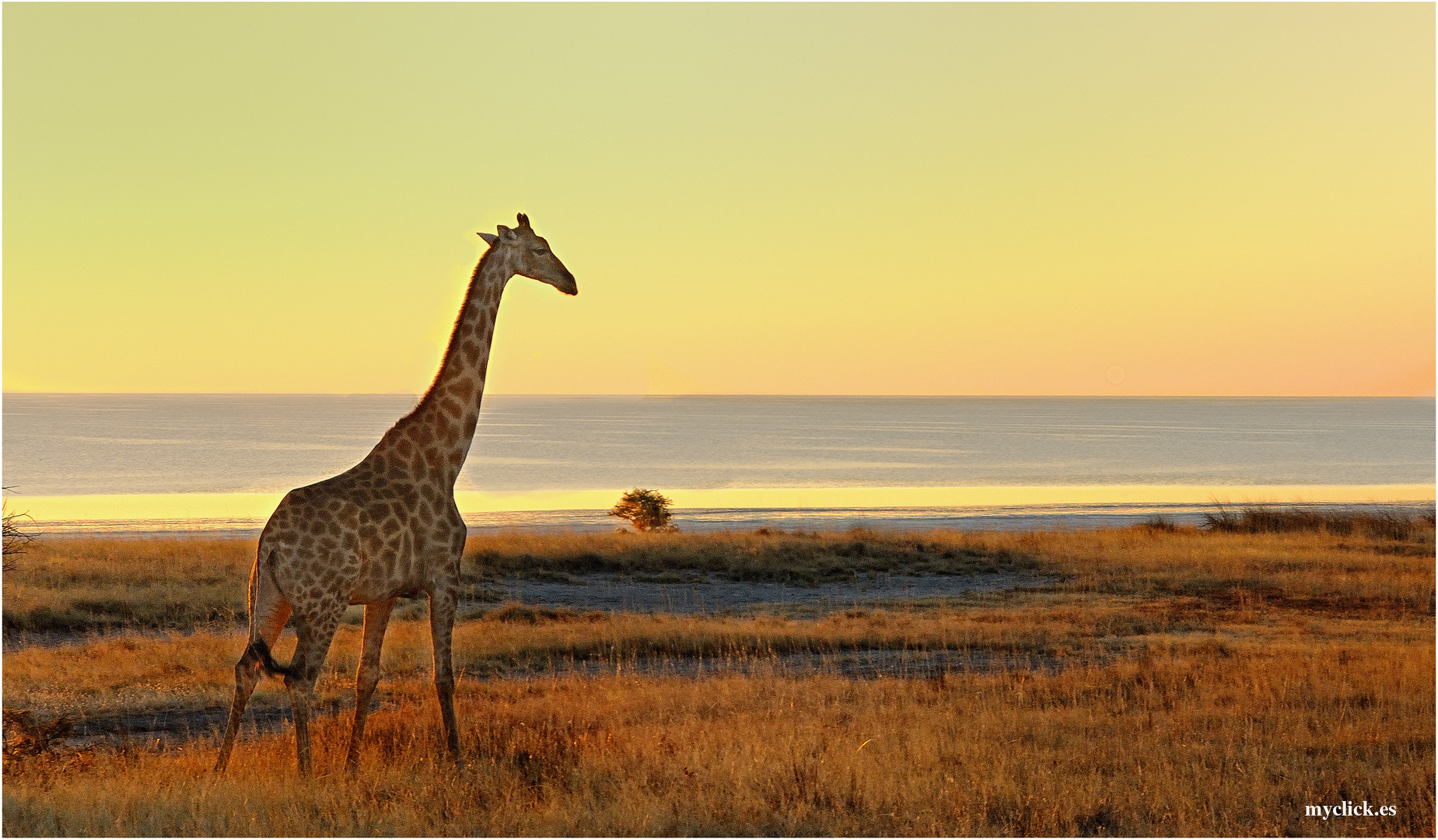 MEMORIAS DE AFRICA-JIRAFA  AL ATARDECER-PN ETOSHA-NAMIBIA