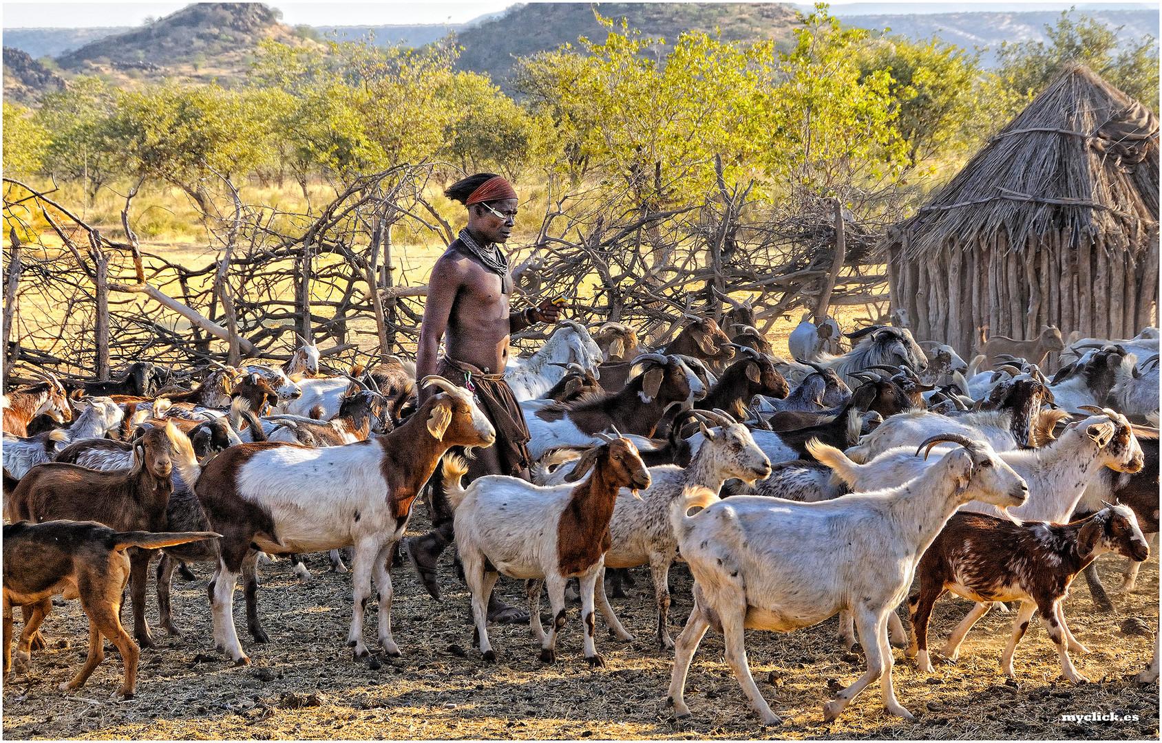 MEMORIAS DE AFRICA-LA RECOGIDA DEL GANADO -LOS HIMBAS -KUKENE -NAMIBIA