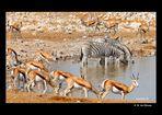 MEMORIAS DE AFRICA-LAS CHARCAS DE ETHOSA-NAMIBIA